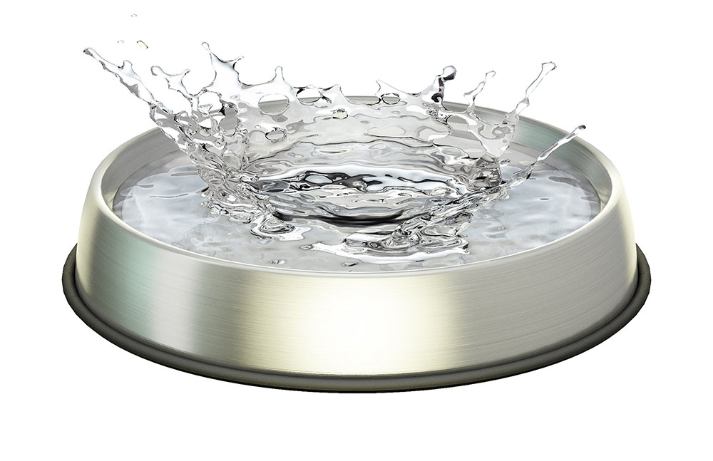Dr Catsby Stainless Steel Water Bowl