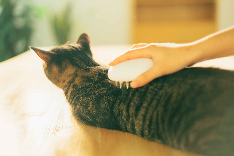 Ergonomic and efficient, the Pidan cat brush helps you groom your cat, loosen their fur and remove it.