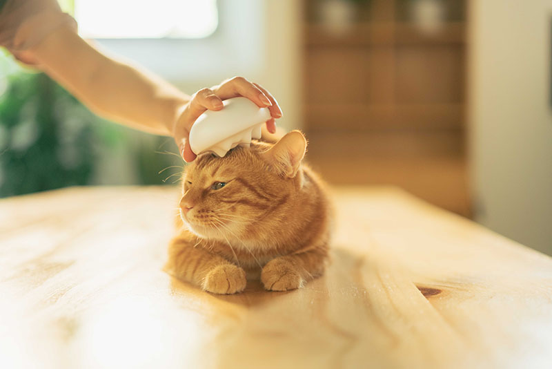 Massaging your cat with a gentle brush can help ease stress, reduce furballs and increase their love for you.