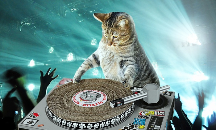 Cat Scratch Pad - DJ Scratcher