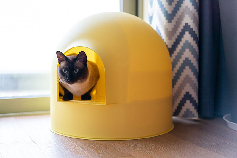 Igloo Cat Litter Box Yellow by Pidan