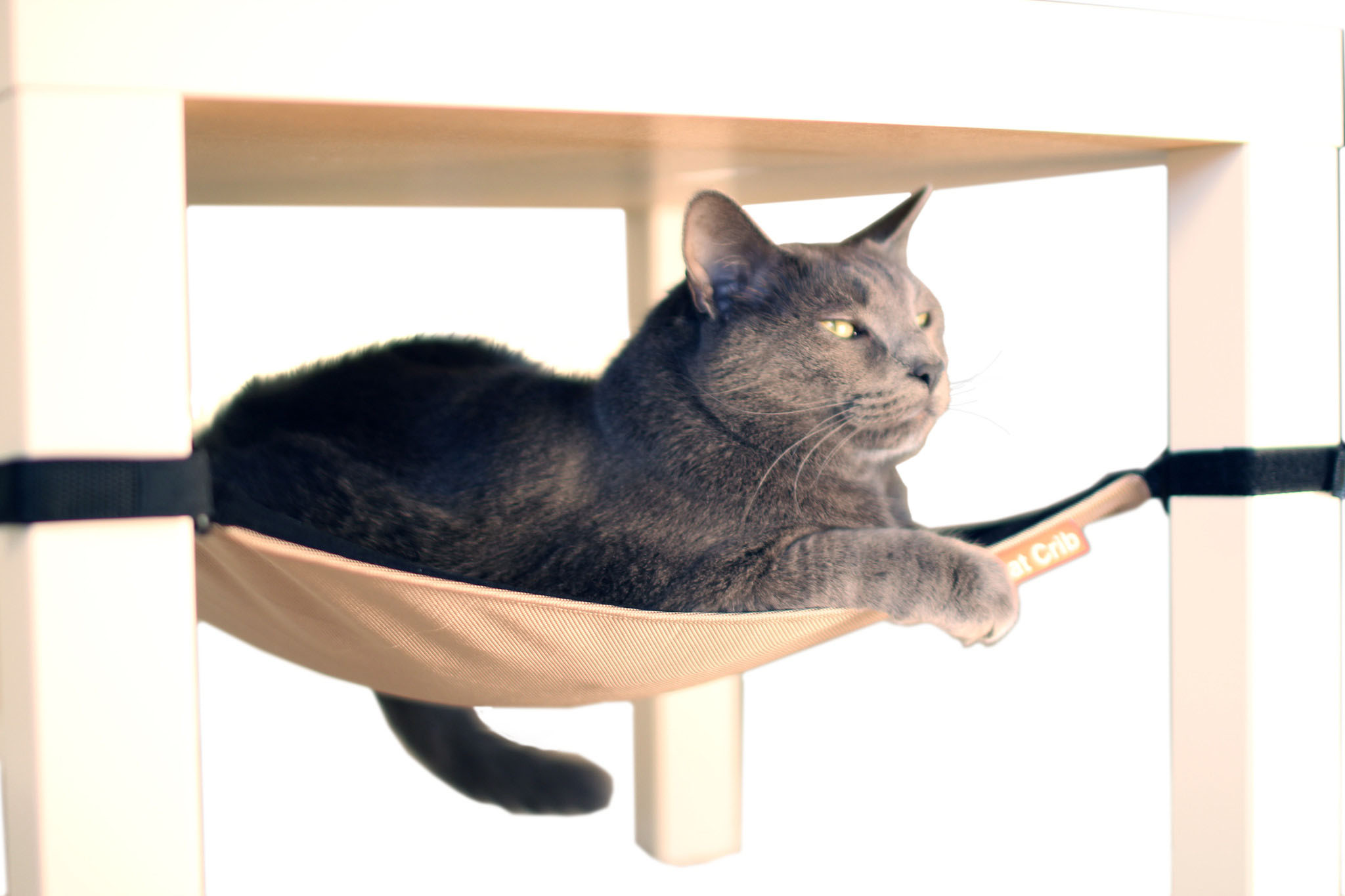Medium image of cat crib hammock