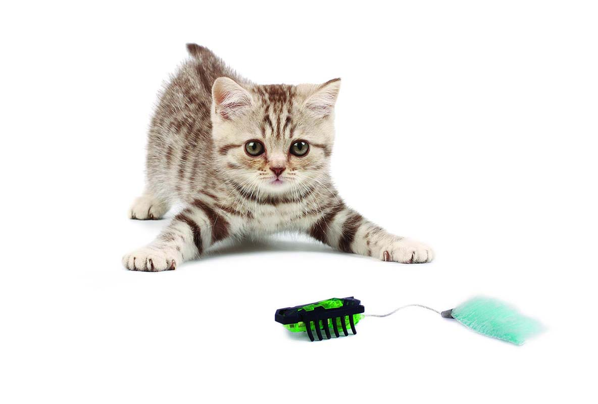 HexBug Cat Toy