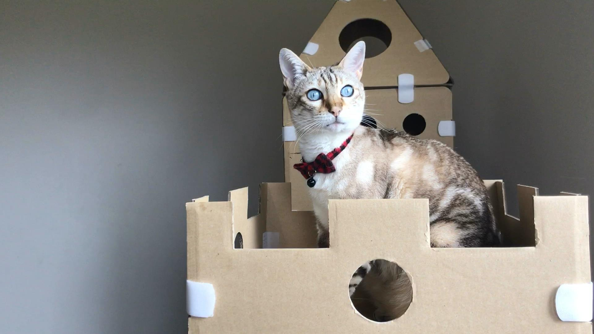 Modular Cat Tower